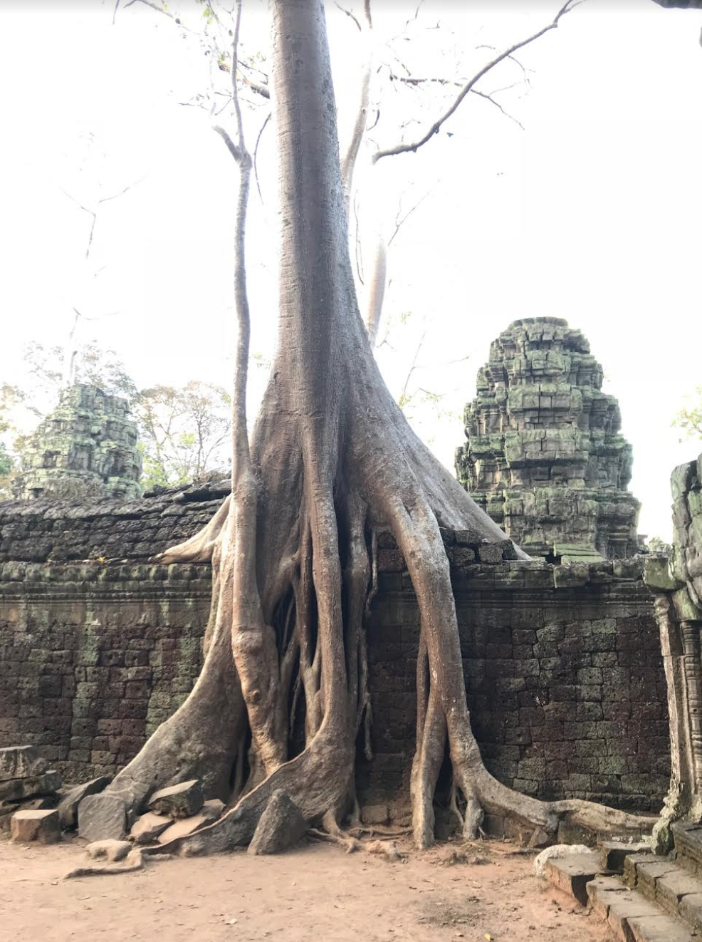 Tree roots: Angkorian builders utilized brick, sandstone, laterite and wood, but what remains is brick, sandstone and laterite, while the wooden elements have decayed overtime.