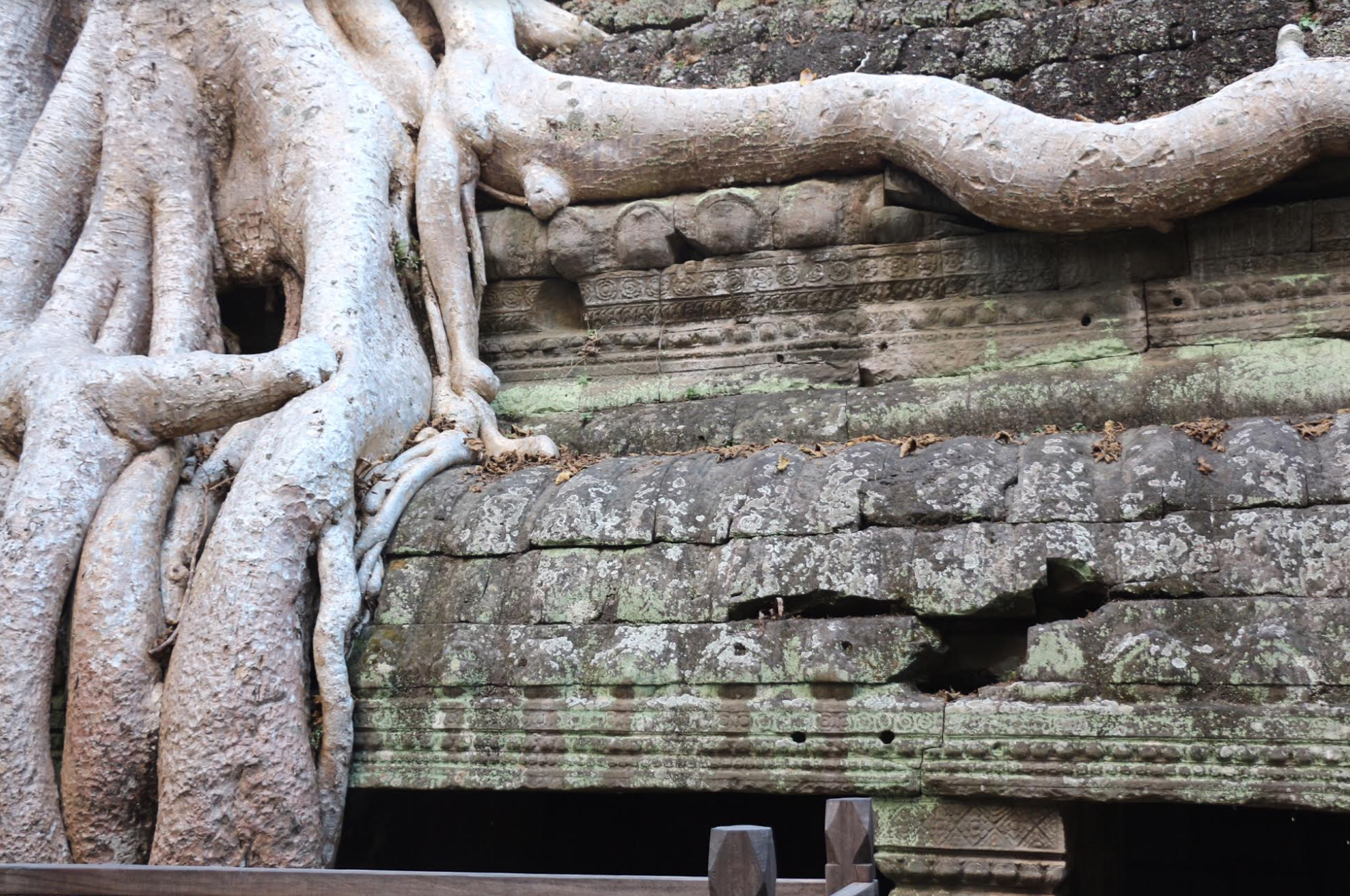 Overgrown tree roots outside fo Angkor Wat